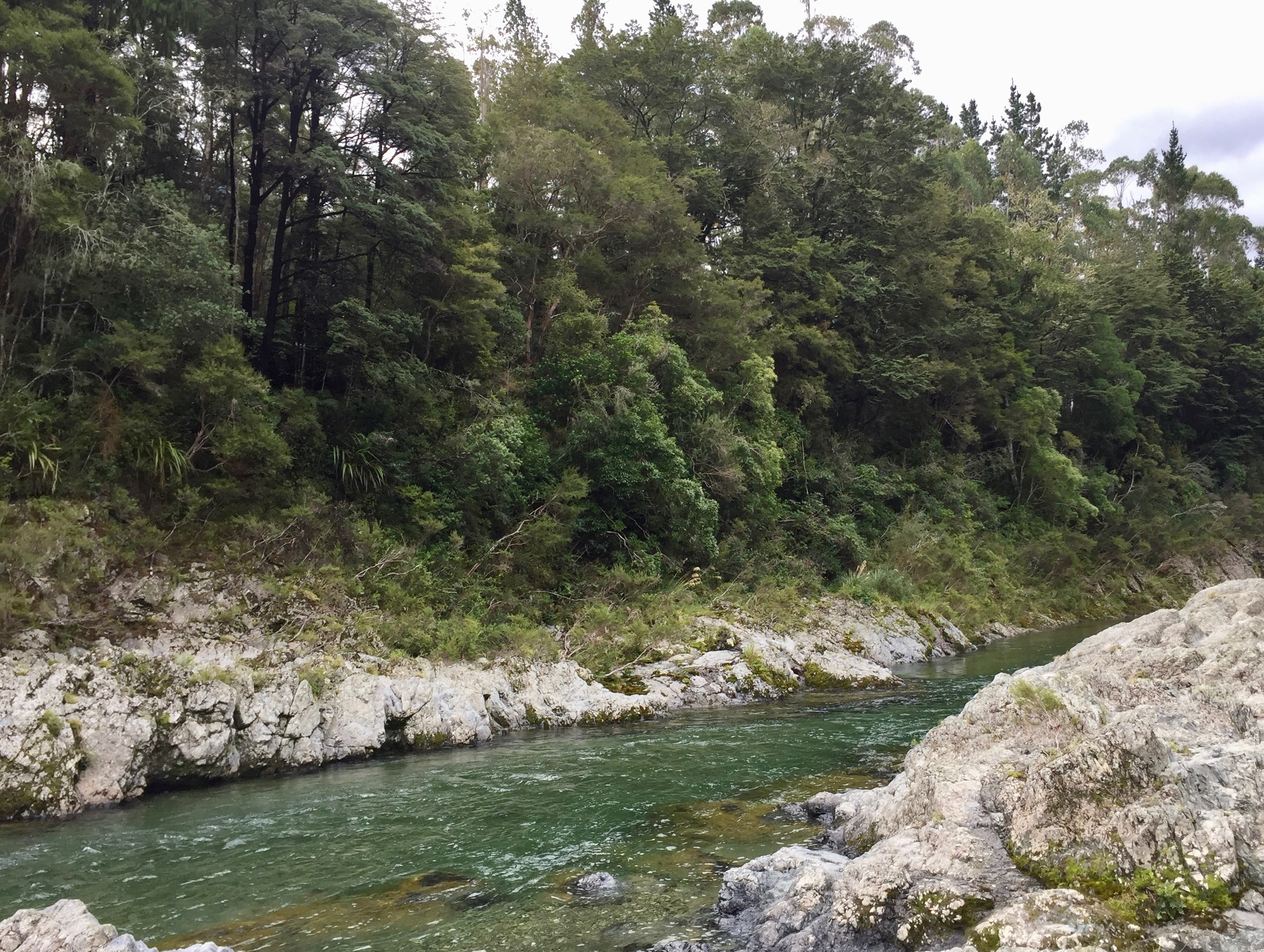 The Pelorus River