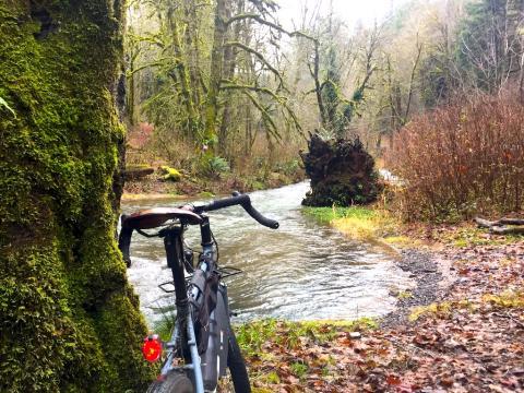 Teal Creek