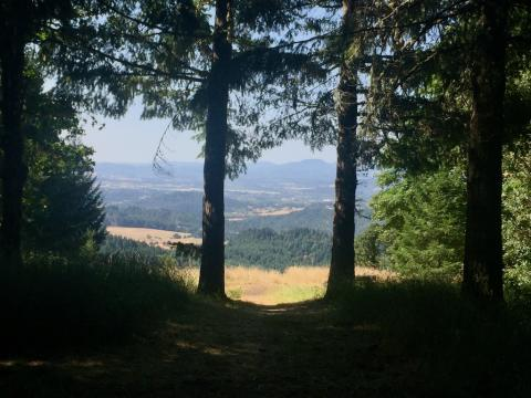 On Dimple Hill